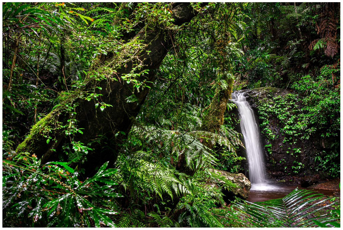 waterfall along coomera circuit in binna burra qld