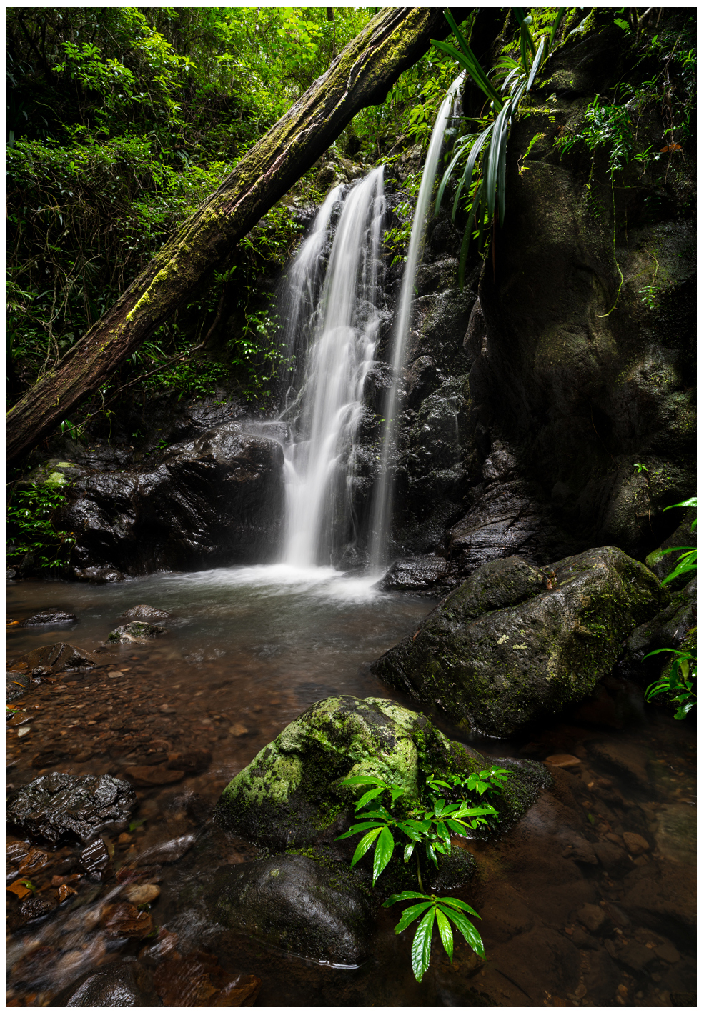 waterfall in springbrook national park qld