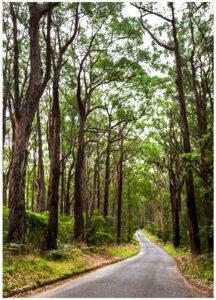 Otway national park australia