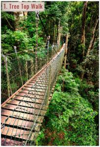 tree top bridge walk through queensland rainforest